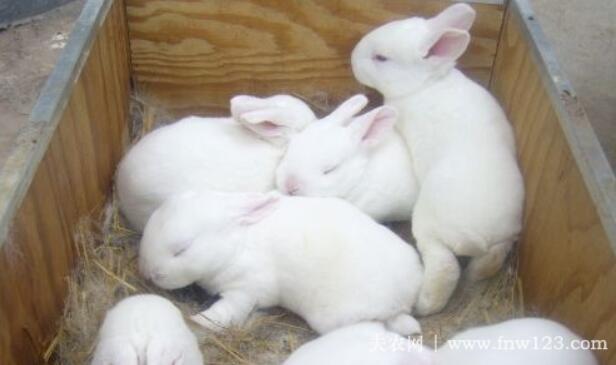 兔子软骨病的常见症状详解
