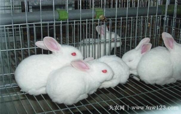 兔子霉变饲料中毒怎么办?(图1)