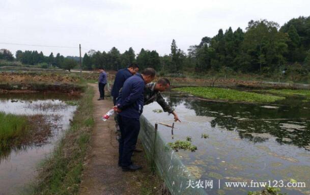 龙虾养殖中的水质要求