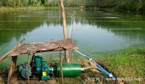 小龙虾的生存水体及水质要求