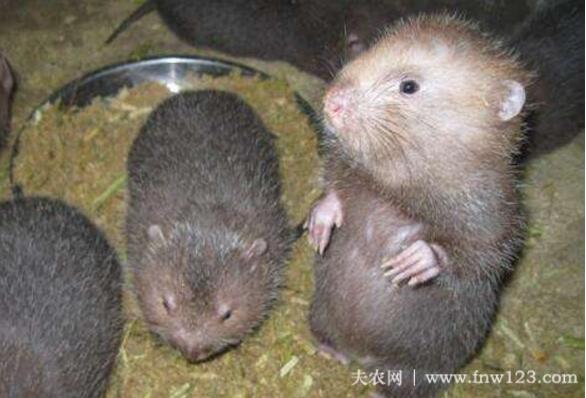 竹鼠精饲料的4种配方