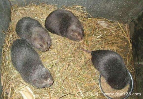 养殖竹鼠赚钱吗,农村竹鼠养殖效益分析(2)