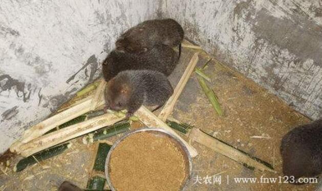 养殖竹鼠赚钱吗,农村竹鼠养殖效益分析(6)