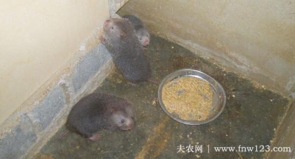 养殖竹鼠赚钱吗,农村竹鼠养殖效益分析(7)