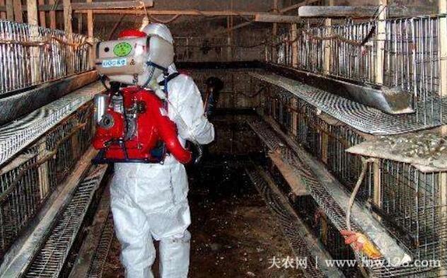 鸡舍消毒的七种方法,石灰消毒法最简便3