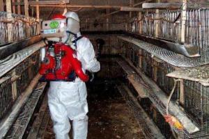 鸡舍内清洗与消毒的四个步骤