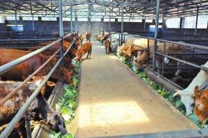 肉牛养殖场的五大类型,建肉牛养殖场必看
