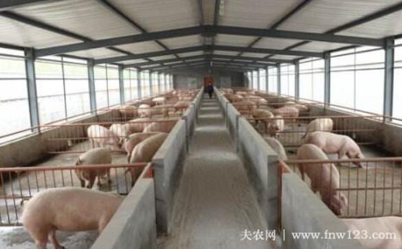 猪舍的适宜温度是多少