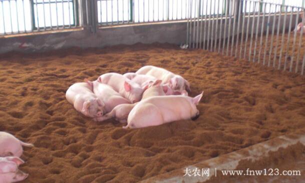 发酵床养猪存在的几个问题