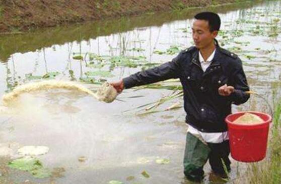 冬季养小龙虾怎么投喂饵料