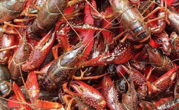 小龙虾的病虫害防治方法