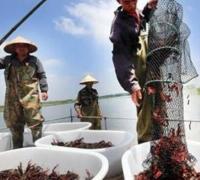 小龙虾肥料的选择要点