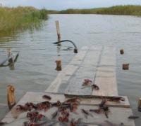 三月份养小龙虾的5个常见问题