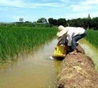 稻田养殖小龙虾怎么控制水位?
