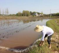 稻田小龙虾的饲养管理要求