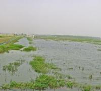 稻田养殖小龙虾时水质难肥的12个原因