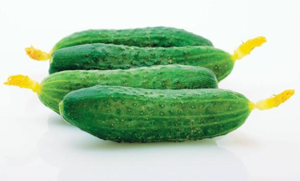 黄瓜种子催芽的合适水温是多少