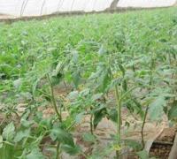 黄瓜怎么施肥才能高产,黄瓜施用肥料的常用方法