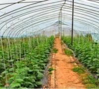 温室黄瓜的施肥原则,温室黄瓜的施肥窍门