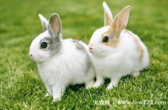 兔子球虫病用什么药好