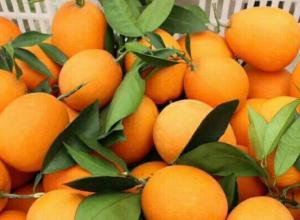 脐橙的主要产地在哪