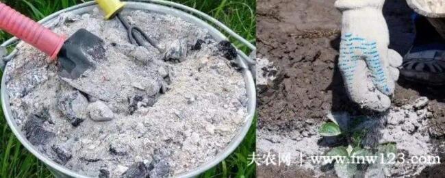草木灰是酸性还是碱性