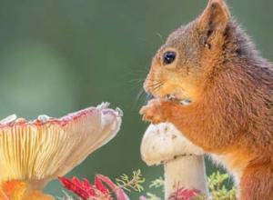 松鼠能活多久,松鼠寿命多长