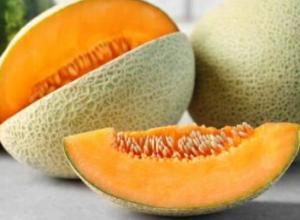 甜瓜适宜的生长温度是多少