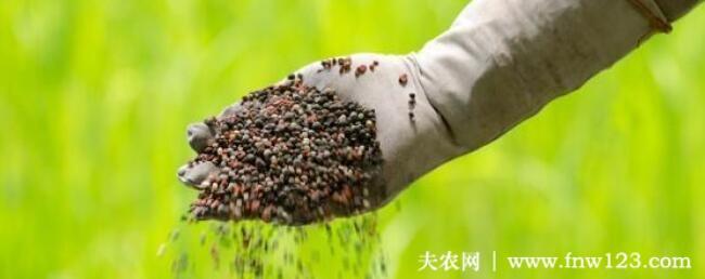 钾肥对植物的作用有哪些