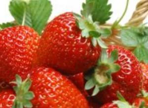 草莓脱毒苗是什么,有什么特点