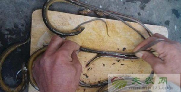 黄鳝怎么去骨,两大去骨方法看一看