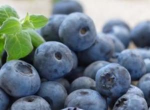 蓝莓什么时候种植,蓝莓的采摘季节是什么时候