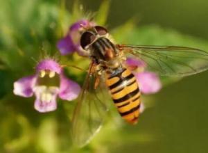蜜蜂合并的最佳时间