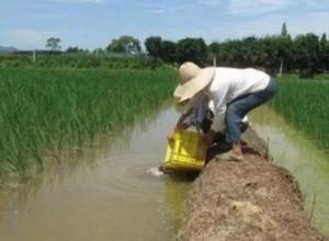 小龙虾养殖时如何加强养殖管理
