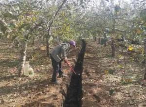 苹果树用什么肥料进行追肥